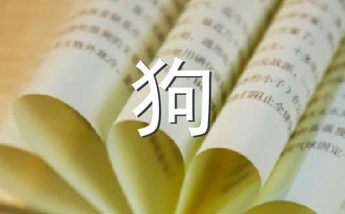★小狗800字作文集锦五篇