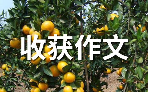 【推荐】意外收获400字作文集锦五篇