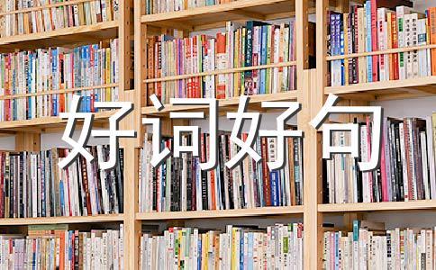 ★端午节祝福800字作文(通用六篇)